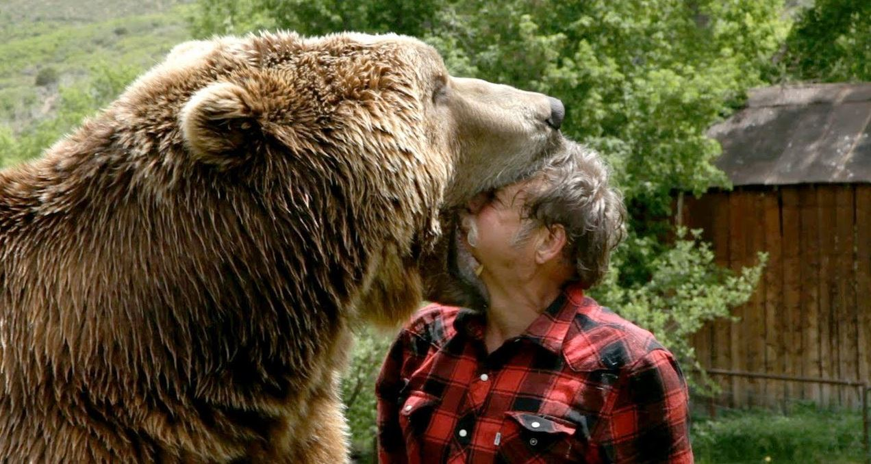 Cached Bear attack last photo