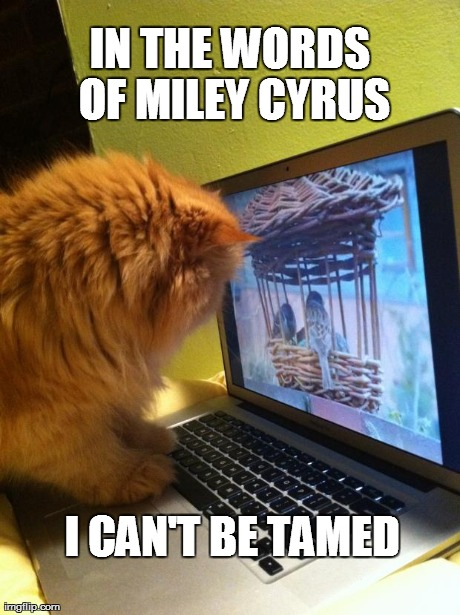 IN THE WORDS OF MILEY CYRUS I CAN'T BE TAMED generated with the Imgflip Meme Generator