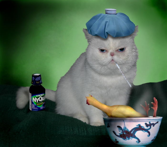 image gallery: sick cat