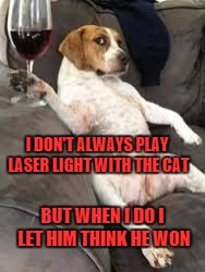 I DON'T ALWAYS PLAY LASER LIGHT WITH THE CAT BUT WHEN I DO I LET HIM THINK HE WON | made w/ Imgflip meme maker