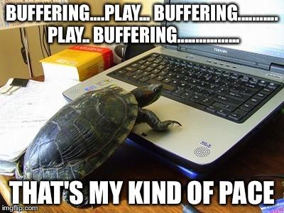 100eg8 turtle computer meme generator imgflip,Turtle Meme Generator