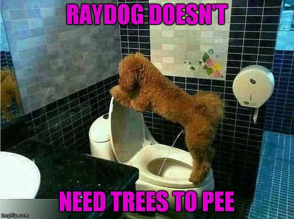 RAYDOG DOESN'T NEED TREES TO PEE | made w/ Imgflip meme maker