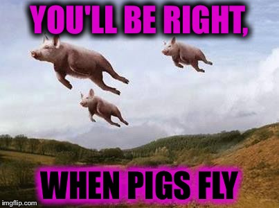 Pigs Fly Imgflip