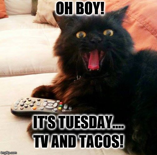 OH BOY! Cat: Taco Tuesday |  OH BOY! IT'S TUESDAY.... TV AND TACOS! | image tagged in oh boy cat,memes,tv,taco,tuesday,favorite | made w/ Imgflip meme maker