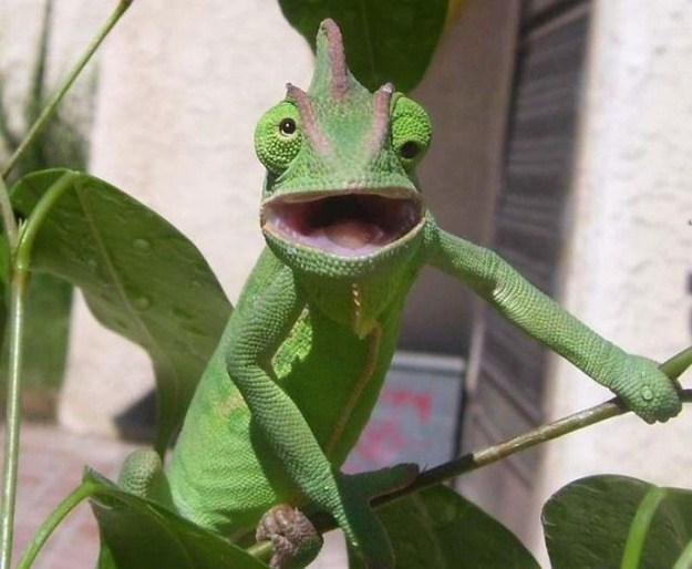 Confused Lizard Meme Generator - Imgflip