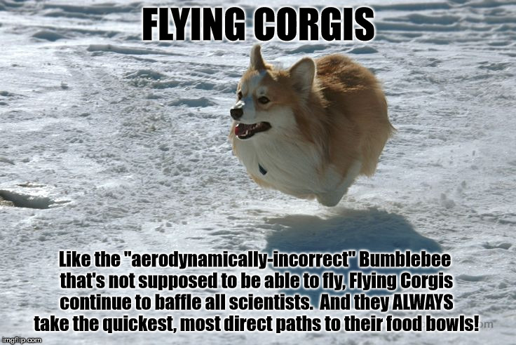 Delta creates most watchable safety video using the ... |Flying Dog Meme