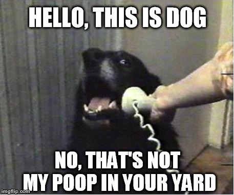 Yes this is dog | HELLO, THIS IS DOG NO, THAT'S NOT MY POOP IN YOUR YARD | image tagged in yes this is dog | made w/ Imgflip meme maker