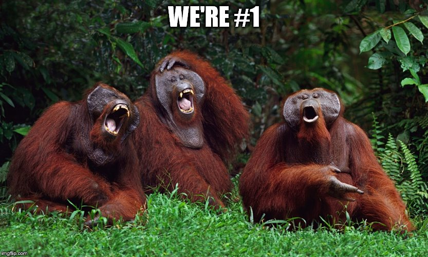 laughing orangutans | WE'RE #1 | image tagged in laughing orangutans | made w/ Imgflip meme maker