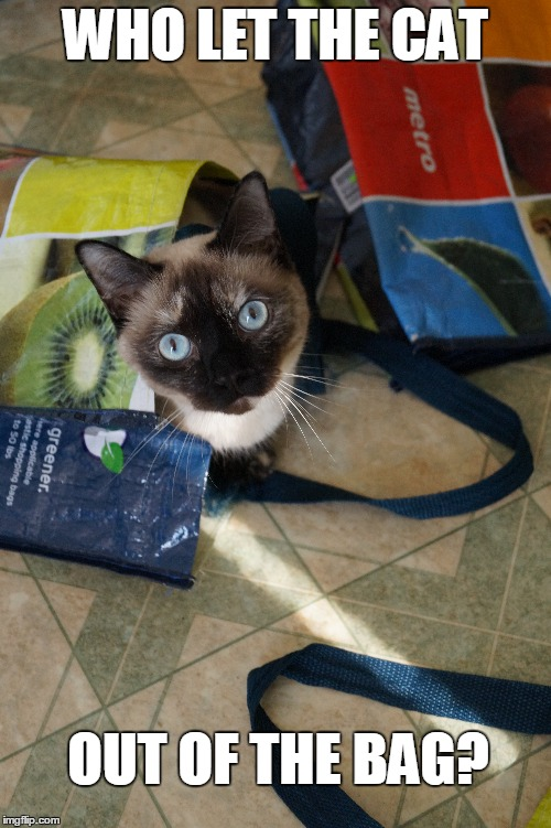Peek-a-boo!! |  WHO LET THE CAT; OUT OF THE BAG? | image tagged in cute cat,napoleon munchkin,munchkins,pretty cat | made w/ Imgflip meme maker