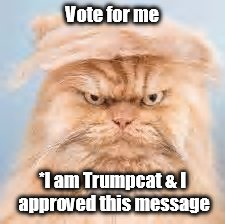 Vote for me *I am Trumpcat & I approved this message | made w/ Imgflip meme maker