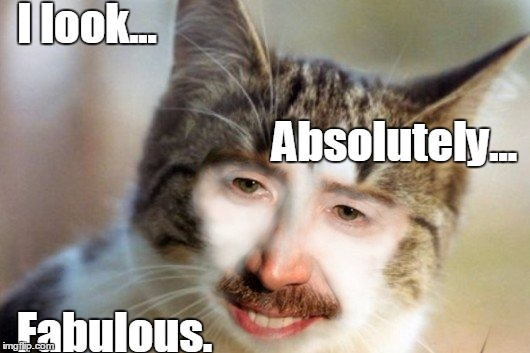 Fab |  I look... Absolutely... Fabulous. | image tagged in funny cat,i'm fabulous | made w/ Imgflip meme maker
