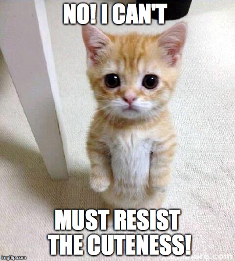 1060w3 cute cat meme imgflip,Resist Meme