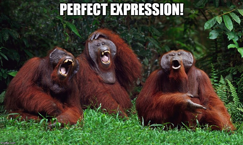 laughing orangutans | PERFECT EXPRESSION! | image tagged in laughing orangutans | made w/ Imgflip meme maker