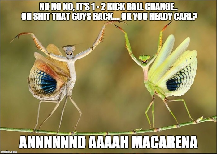 Praying mantis Macarena  | NO NO NO, IT'S 1 - 2 KICK BALL CHANGE.. OH SHIT THAT GUYS BACK.... OK YOU READY CARL? ANNNNNND AAAAH MACARENA | image tagged in macarena,praying mantis,dance dance,dance lesson,nat geo | made w/ Imgflip meme maker