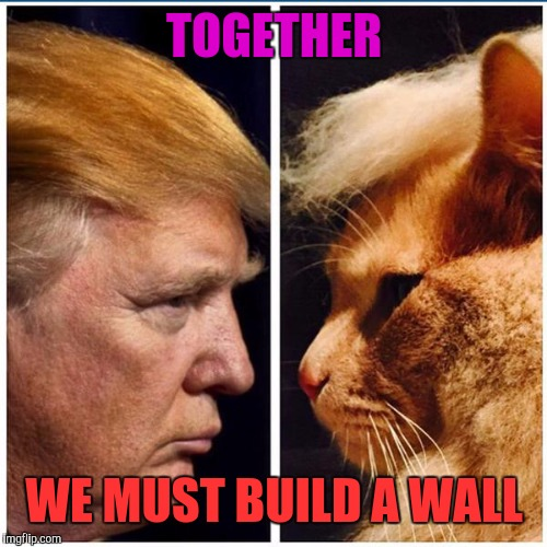 Trump - Cat | TOGETHER WE MUST BUILD A WALL | image tagged in trump - cat | made w/ Imgflip meme maker
