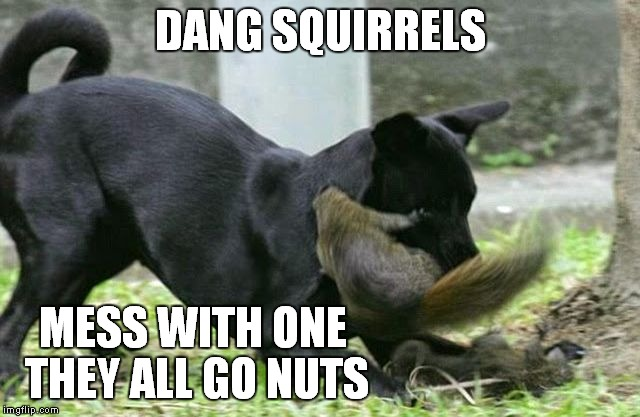 DANG SQUIRRELS MESS WITH ONE THEY ALL GO NUTS | made w/ Imgflip meme maker