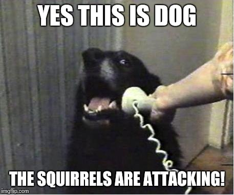YES THIS IS DOG THE SQUIRRELS ARE ATTACKING! | made w/ Imgflip meme maker