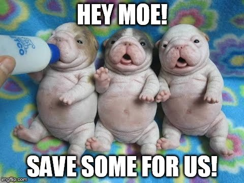 why I oughtta... | HEY MOE! SAVE SOME FOR US! | image tagged in memes,dogs,puppies,3 stooges | made w/ Imgflip meme maker