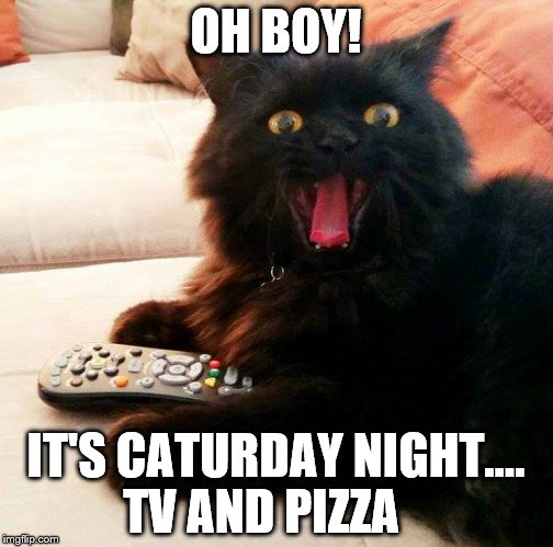 Image result for it's caturday images