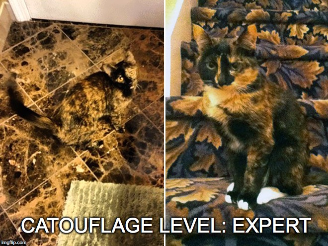 Has anyone seen Kitty? | CATOUFLAGE LEVEL: EXPERT | image tagged in catouflage,expert,camouflage | made w/ Imgflip meme maker