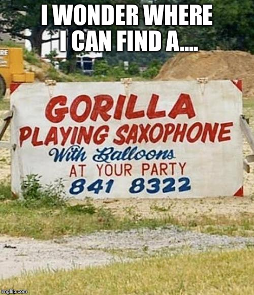 Gorilla | I WONDER WHERE I CAN FIND A.... | image tagged in gorilla | made w/ Imgflip meme maker