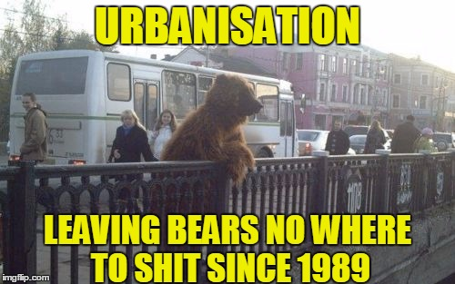 City Bear | URBANISATION LEAVING BEARS NO WHERE TO SHIT SINCE 1989 | image tagged in memes,city bear | made w/ Imgflip meme maker