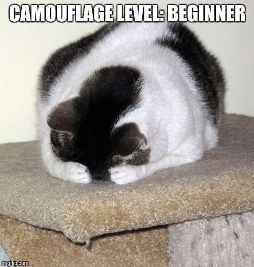 CAMOUFLAGE LEVEL: BEGINNER | made w/ Imgflip meme maker