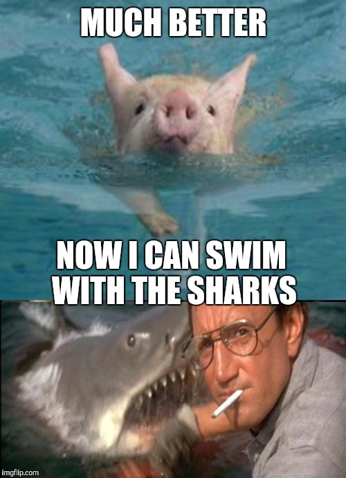 MUCH BETTER NOW I CAN SWIM WITH THE SHARKS | made w/ Imgflip meme maker
