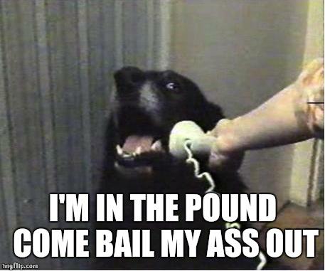 Ass Pound
