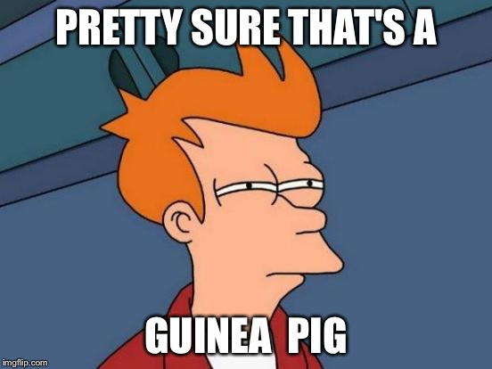 Futurama Fry Meme | PRETTY SURE THAT'S A GUINEA  PIG | image tagged in memes,futurama fry | made w/ Imgflip meme maker