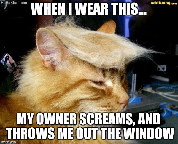 donald trump cat |  WHEN I WEAR THIS... MY OWNER SCREAMS, AND THROWS ME OUT THE WINDOW | image tagged in donald trump cat | made w/ Imgflip meme maker