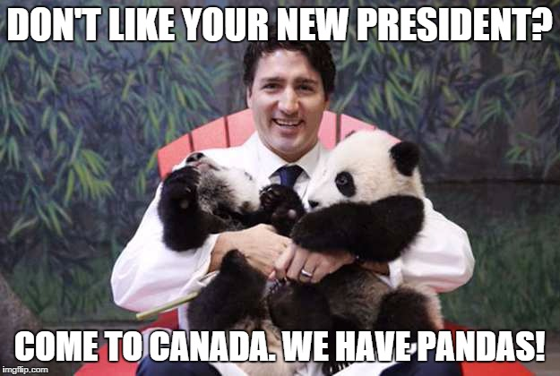 DON'T LIKE YOUR NEW PRESIDENT? COME TO CANADA. WE HAVE PANDAS! | image tagged in justin trudeau,pandas | made w/ Imgflip meme maker
