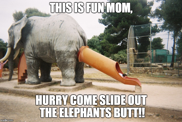 Who Thought This Was A Good Idea? | THIS IS FUN MOM, HURRY COME SLIDE OUT THE ELEPHANTS BUTT!! | image tagged in elephant,funny memes,lolz | made w/ Imgflip meme maker