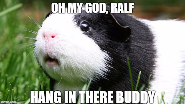 Scared Guinea Pig | OH MY GOD, RALF HANG IN THERE BUDDY | image tagged in scared guinea pig | made w/ Imgflip meme maker