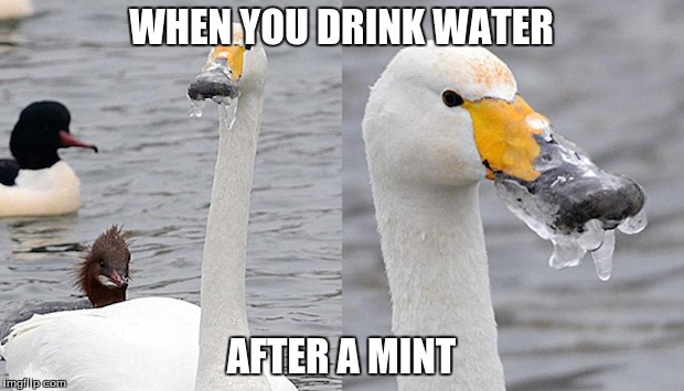 10irfm frozen duck imgflip,Duck Meme