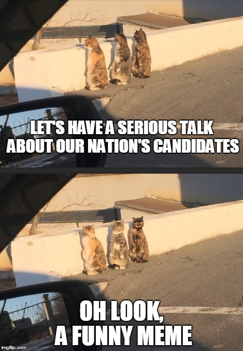 watching CNN like | LET'S HAVE A SERIOUS TALK ABOUT OUR NATION'S CANDIDATES OH LOOK, A FUNNY MEME | image tagged in funny cats | made w/ Imgflip meme maker