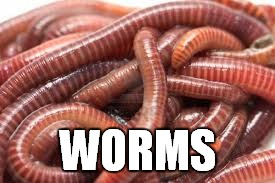 WORMS | made w/ Imgflip meme maker