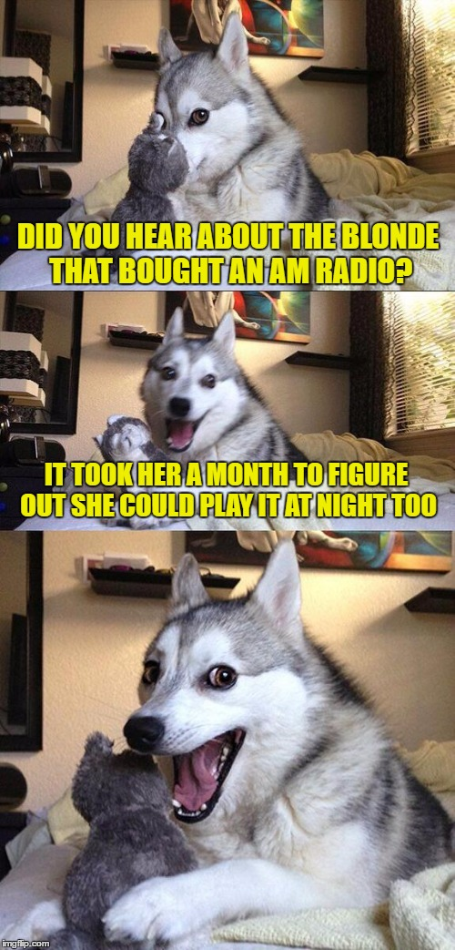 Bad Pun Dog Meme | DID YOU HEAR ABOUT THE BLONDE THAT BOUGHT AN AM RADIO? IT TOOK HER A MONTH TO FIGURE OUT SHE COULD PLAY IT AT NIGHT TOO | image tagged in memes,bad pun dog | made w/ Imgflip meme maker
