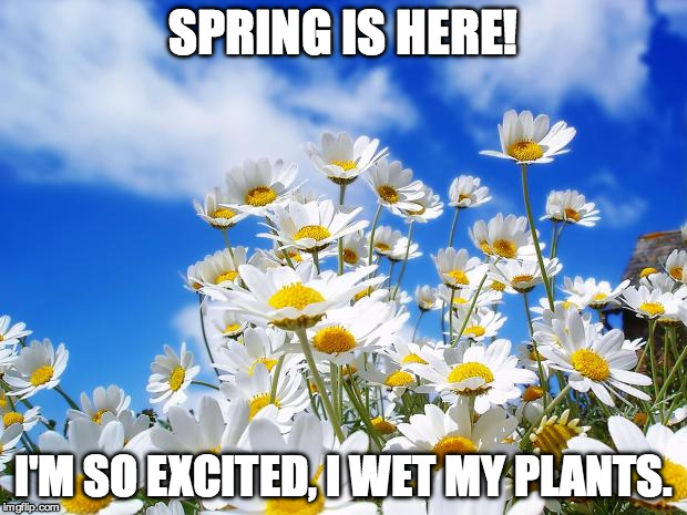 Spring is here! | SPRING IS HERE! I'M SO EXCITED, I WET MY PLANTS. | image tagged in spring daisy flowers,spring,plants,comedy,funny | made w/ Imgflip meme maker