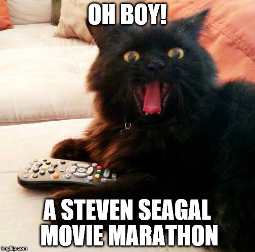 OH BOY! Cat: Steven Seagal Time |  OH BOY! A STEVEN SEAGAL MOVIE MARATHON | image tagged in oh boy cat,memes,steven seagal,movie,marathon | made w/ Imgflip meme maker