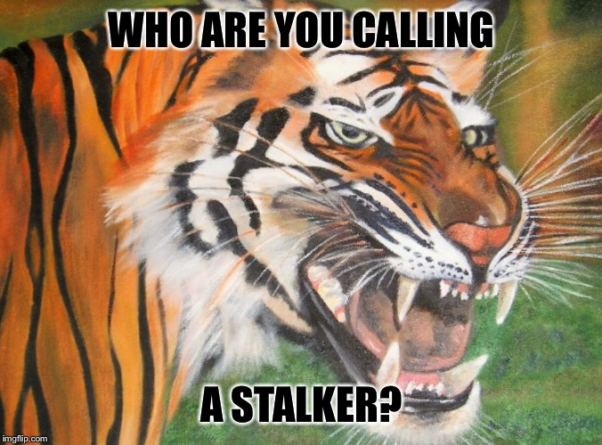 Hipster tiger | WHO ARE YOU CALLING A STALKER? | image tagged in hipster tiger | made w/ Imgflip meme maker