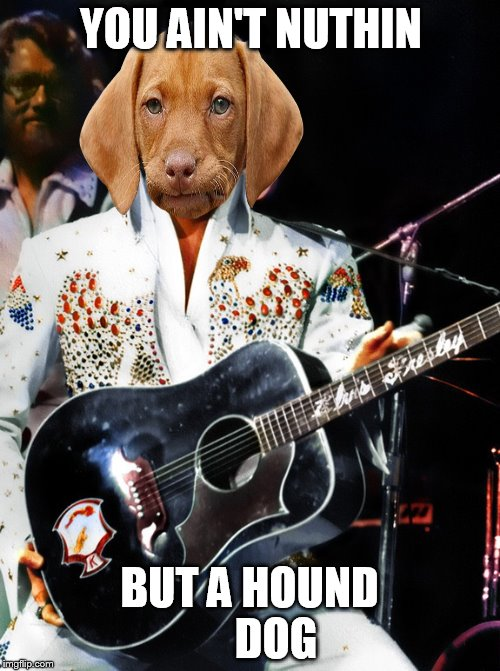 YOU AIN'T NUTHIN BUT A HOUND      DOG | made w/ Imgflip meme maker