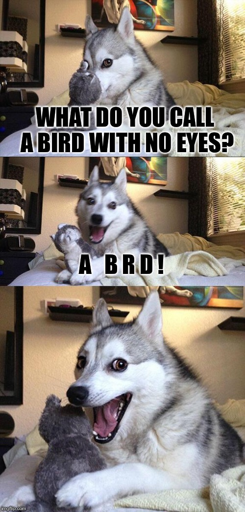 R And D Dog Cat Meme