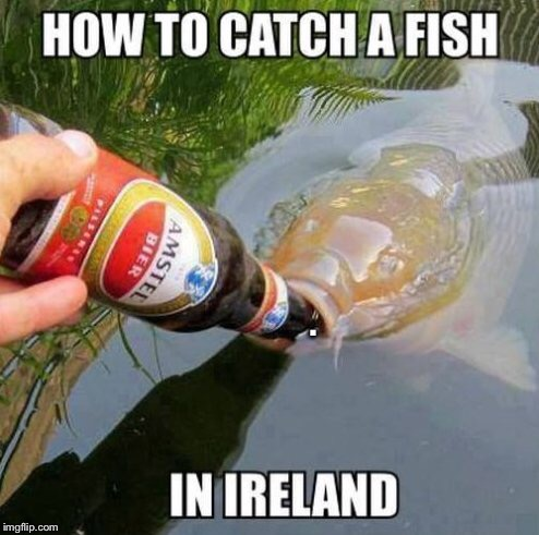 How to catch a fish in Ireland  | . | image tagged in irish,fish,funny,fishing,ireland,animals | made w/ Imgflip meme maker