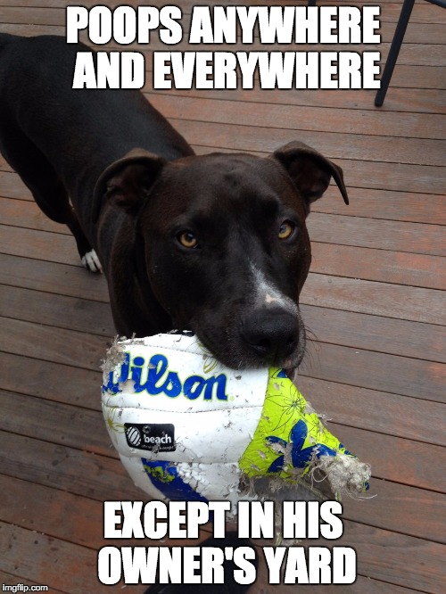 scumbag dog | POOPS ANYWHERE AND EVERYWHERE EXCEPT IN HIS OWNER'S YARD | image tagged in scumbag dog,AdviceAnimals | made w/ Imgflip meme maker
