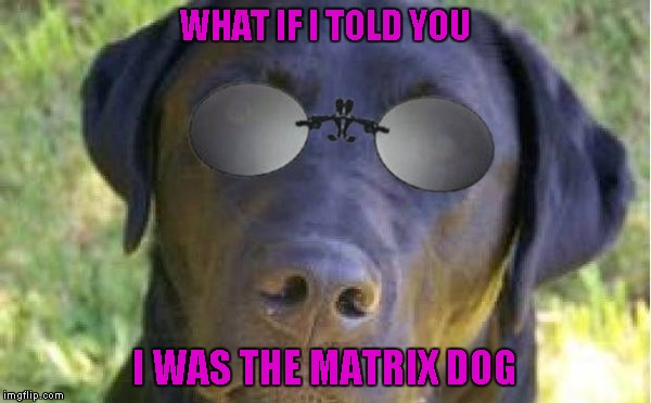 WHAT IF I TOLD YOU I WAS THE MATRIX DOG | made w/ Imgflip meme maker