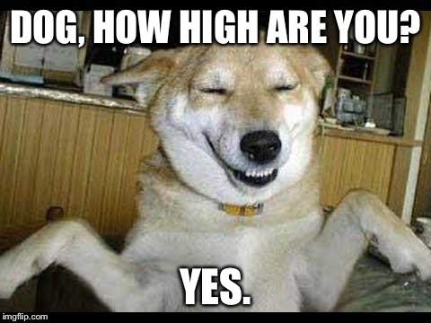 .....I'm Speechless: |  DOG, HOW HIGH ARE YOU? YES. | image tagged in memes,funny dogs,weed | made w/ Imgflip meme maker
