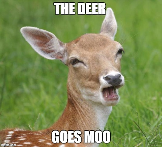 Go Home Bambi, You're Drunk | THE DEER GOES MOO | image tagged in go home bambi you're drunk | made w/ Imgflip meme maker