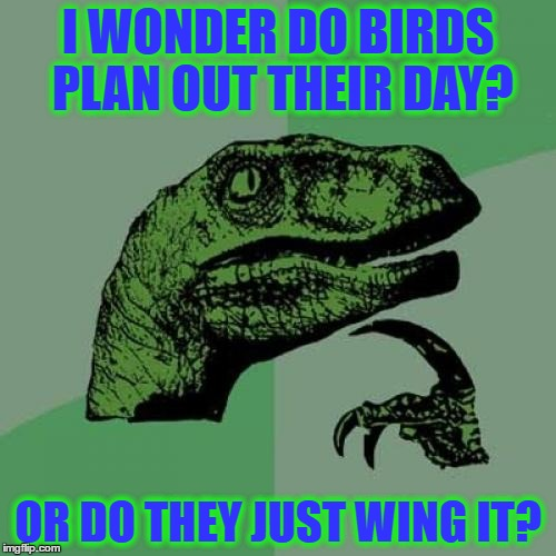 Philosoraptor Meme | I WONDER DO BIRDS PLAN OUT THEIR DAY? OR DO THEY JUST WING IT? | image tagged in memes,philosoraptor | made w/ Imgflip meme maker