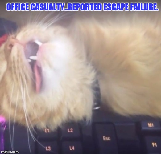 OFFICE CASUALTY..REPORTED ESCAPE FAILURE. | image tagged in pet humor | made w/ Imgflip meme maker